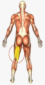 Preventing Hamstring Injuries