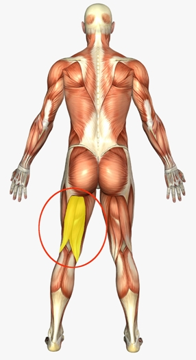 Fix Hamstring Pain